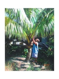 Coconut Shade, 2014 Giclee Print by Colin Bootman