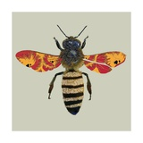 Honey Bee, 2010 Giclee Print by Sarah Hough