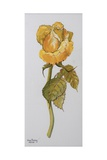 Single Yellow Rose Arthur Bell, 2006 Giclee Print by Joan Thewsey