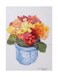 The Multicoloured Primrose 2011 Giclee Print by Joan Thewsey