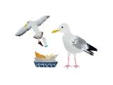 Seagulls, 2014 Impression giclée par Isobel Barber