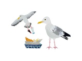 Seagulls, 2014 Giclee Print by Isobel Barber