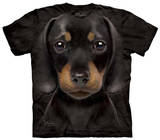 Youth: Dachshund Puppy Shirts