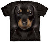 Dachshund Puppy Shirts