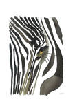 Zebra Eye Prints by Jessica Durrant