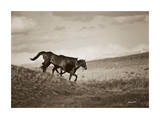 Live Like Someone Left the Gate Open Giclee Print by Barry Hart