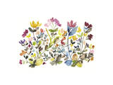 High Country Wildflowers N. 3 Giclee Print by Kiana Mosley