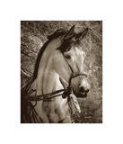 Impatiently Waiting Giclee Print by Barry Hart