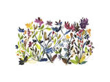 High Country Wildflowers Giclee Print by Kiana Mosley