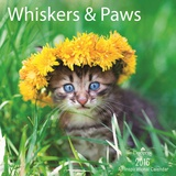 Whiskers & Paws  - 2016 Calendar Calendars