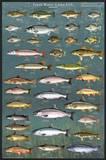 Fresh Water Game Fish Print