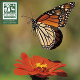 National Wildlife Federation - 2016 Mini Calendar Calendars