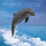 Whales & Dolphins  - 2016 Calendar Calendars