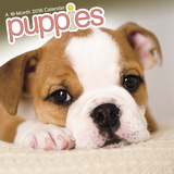 Puppies - 2016 Mini Calendar Calendars