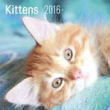 Kittens Blue  - 2016 Calendar Calendars