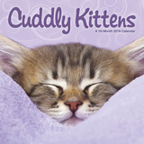 Cuddly Kittens  - 2016 Calendar Calendars