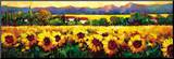 Sweeping Fields of Sunflowers Mounted Print by Nancy O'toole
