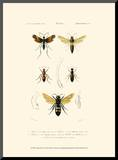 Antique Bees I Mounted Print by  Blanchard