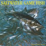 Saltwater Fish - 2016 Calendar Calendars