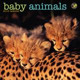 Baby Animals - 2016 Mini Calendar Calendars