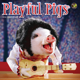 Playful Pigs - 2016 Mini Calendar Calendars