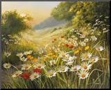 Evening Sun Mounted Print by Mary Dipnall