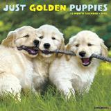Golden Puppies - 2016 Calendar Calendars