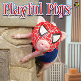 Playful Pigs - 2016 Calendar Calendars