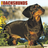 Dachshunds - 2016 Calendar Calendars