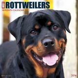 Rottweilers - 2016 Calendar Calendars