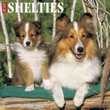 Shelties - 2016 Calendar Calendars