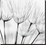 Abstract Dandelion Flower Stretched Canvas Print
