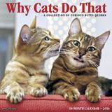 Why Cats Do That - 2016 Calendar Calendars