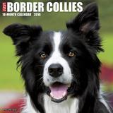 Border Collies - 2016 Calendar Calendars