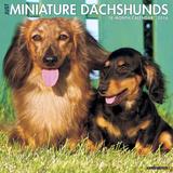 Mini Dachshunds - 2016 Calendar Calendars
