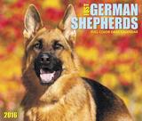 Just German Shepherds - 2016 Boxed Calendar Calendars