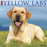Yellow Labs - 2016 Calendar Calendars
