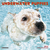 Underwater Puppies Mini - 2016 Mini Calendar Calendars