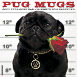 Pug Mugs - 2016 Calendar Calendars