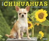 Just Chihuahuas - 2016 Boxed Calendar Calendars
