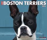 Just Boston Terriers - 2016 Boxed Calendar Kalendarze