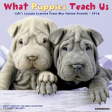What Puppies Teach Us - 2016 Calendar Calendars