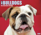 Just Bulldogs - 2016 Boxed Calendar Calendars