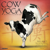 Cow Yoga - 2016 Calendar Calendars