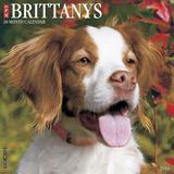 Brittanys - 2016 Calendar Calendars