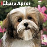 Lhasa Apsos - 2016 Calendar Calendars