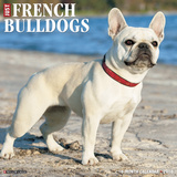 French Bulldogs - 2016 Calendar Calendars