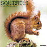 Squirrels - 2016 Calendar Calendars
