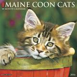 Maine Coon Cats - 2016 Calendar Calendars