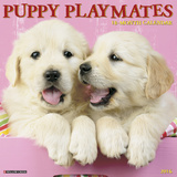 Puppy Playmates - 2016 Calendar Calendars